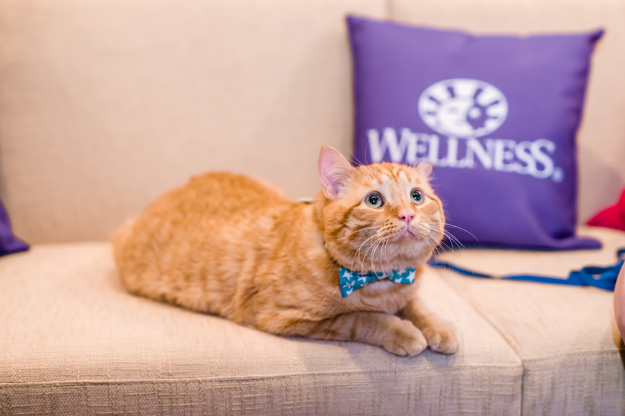 Feline Fans Descend on SoCal's Annual CatCon To Celebrate Our Furry Friends!